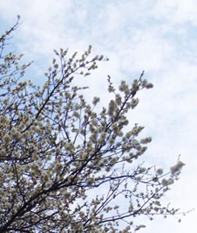 冬桜受験_0312_edited-1.jpg
