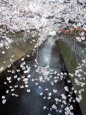 桜_3506_edited-1.jpg